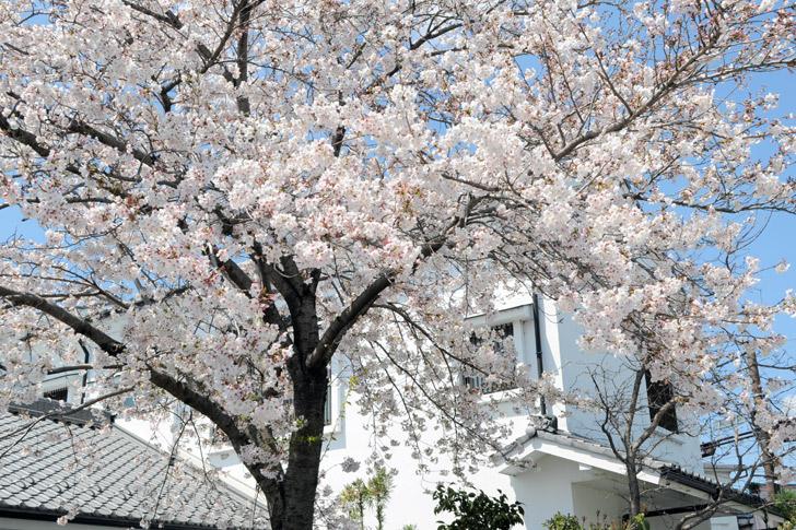 たじみ 春