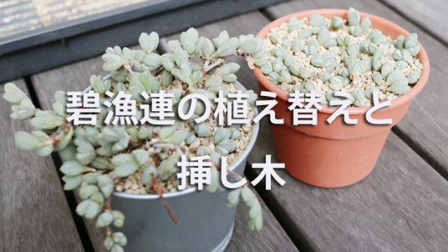碧魚連(へきぎょれん)